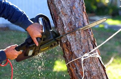 Hiring Tree Service Professionals To Handle Your Trees